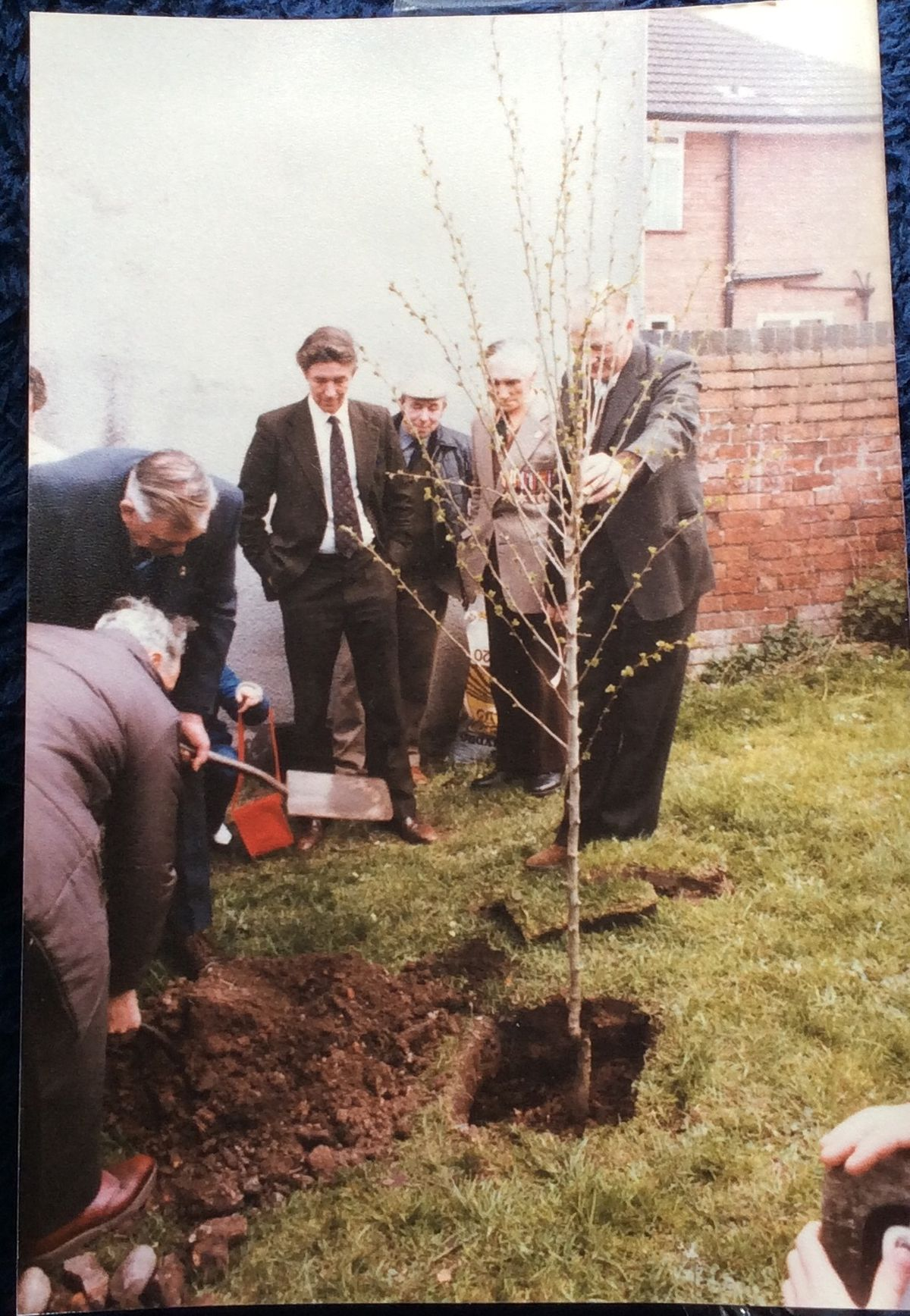 The tree being planted on May 8, 1985