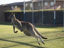 Real-life socceroo stops play during Australian football match