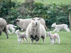 Farmers call for tougher dog attack laws