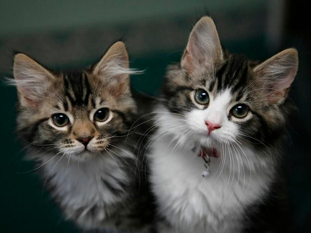 Cattery near Wem to help rescue centre | Shropshire Star