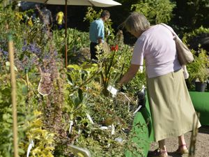 SHROPSHIRE STAR ( JOHN SAMBROOKS ) 28/08/17..Looking for a bargain at the flower show at The Dorothy Clive Garden, Willoughbridge, Shropshire................