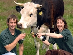 Shropshire farm eviction 'a threat to spring fair'