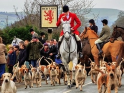 South Shropshire Hunt says its activities were within law when hound died
