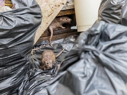 Coronavirus: Householders urged to be vigilant to prevent pest problems