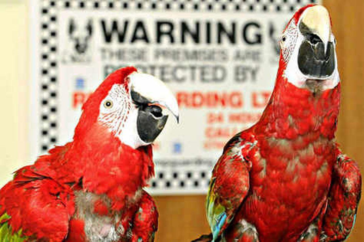 Barking parrots go on patrol
