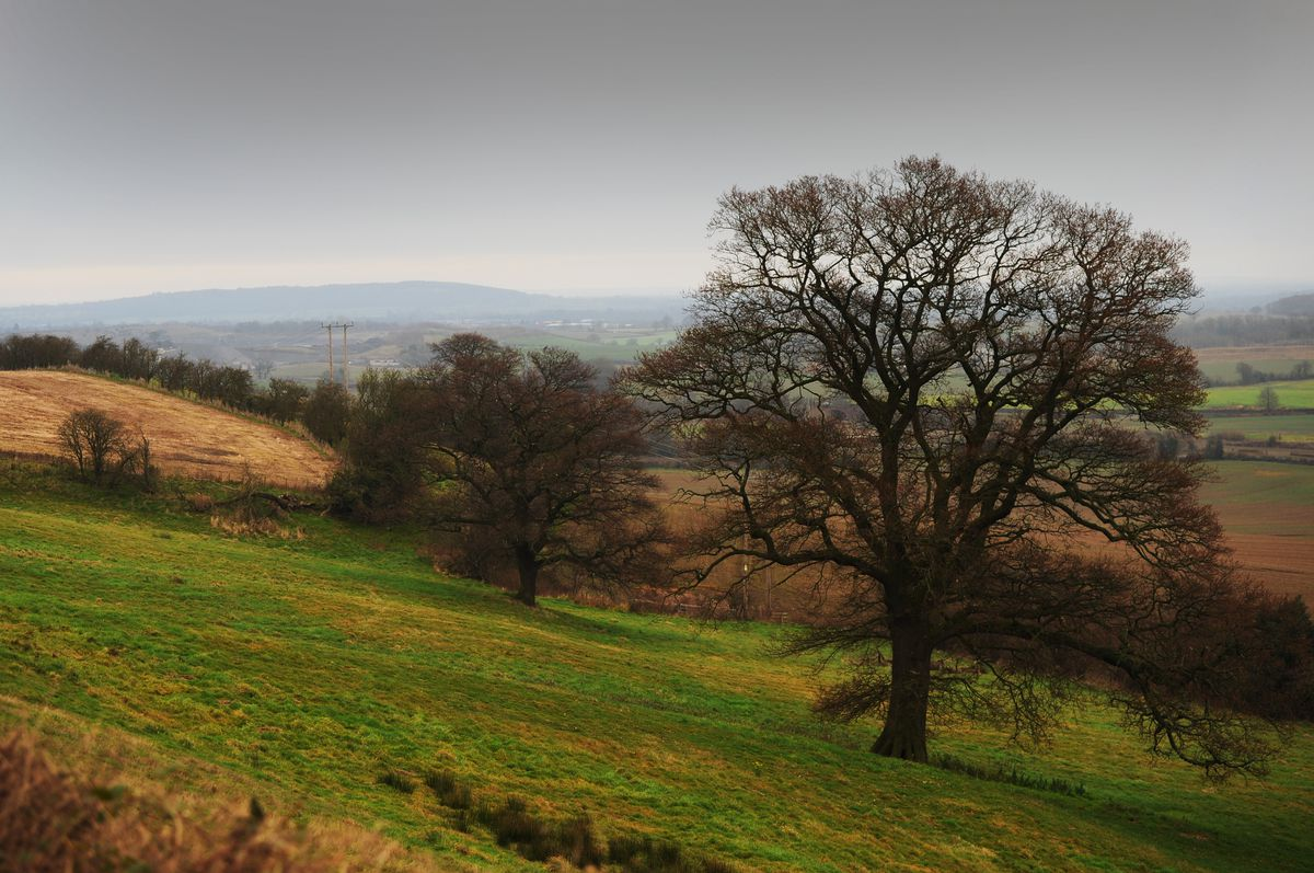 A view from Lyth Hill