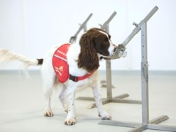 Plea for 'Covid odour' samples as part of sniffer dog trial