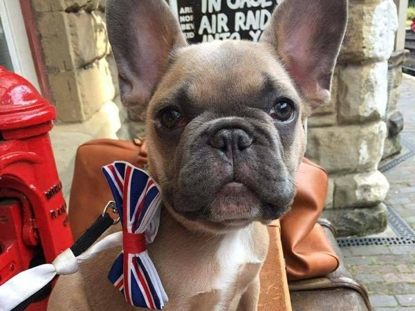 Now em-bark-ing: A doggy day out on Severn Valley Railway