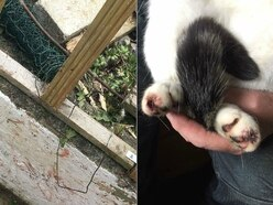 10-year animal ban for Shropshire man who set trap for his neighbour's cat