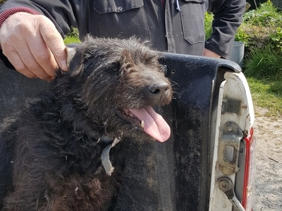 'What sort of person does that?' Dog attacked as thieves strike at farm