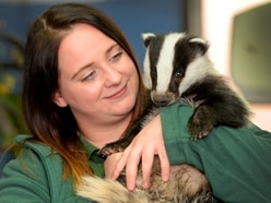 Helping hand for animals great and small