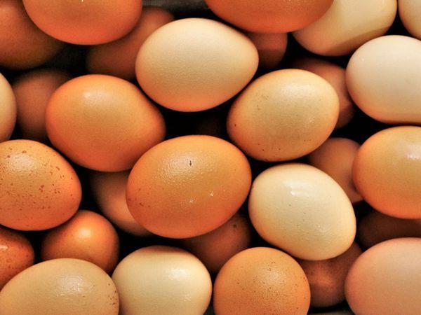 Free range egg farm near Telford gets go-ahead to double production