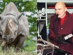 What links this 90s alt-rock band and an eastern black rhino?