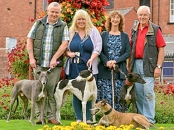 Shropshire dog rescuer 'sickened' by cruelty cases