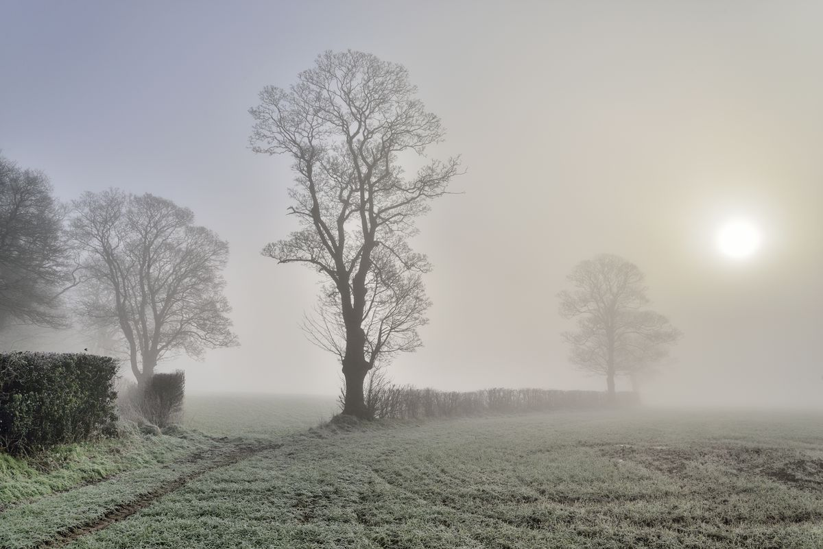 Chris Lewis won the Selby Martin Prize for Trees In The Mist