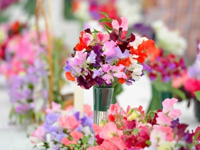 Hundreds turn out to Wem Sweet Pea show