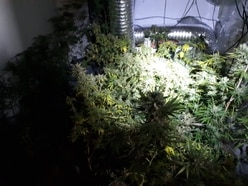 Cannabis taken from house near Broseley in morning raid