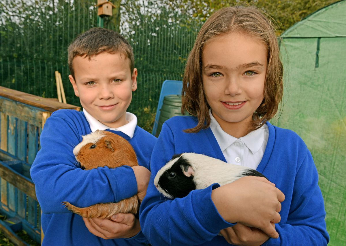 Daisy Bourne, 10 and Max Higginson, 8, with new guinea pigs Oreo and Basil