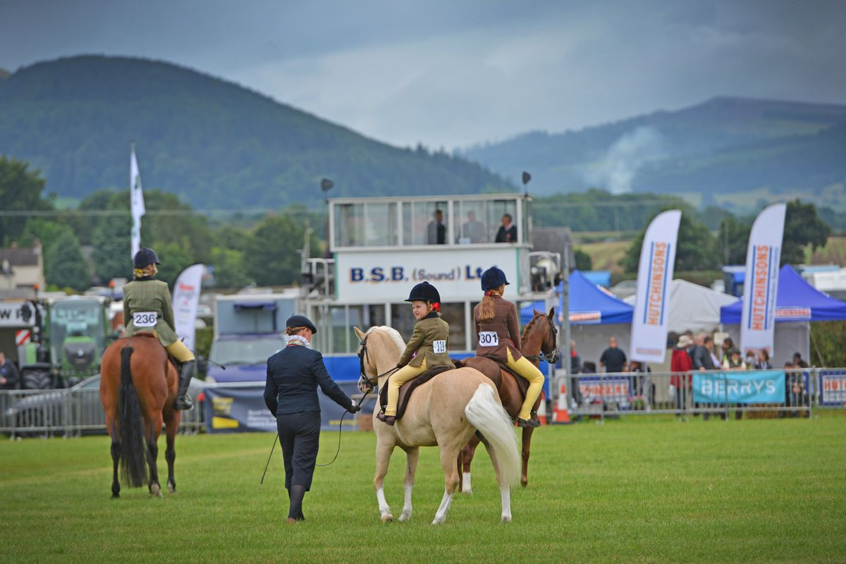 A Palomino horse in the main arena