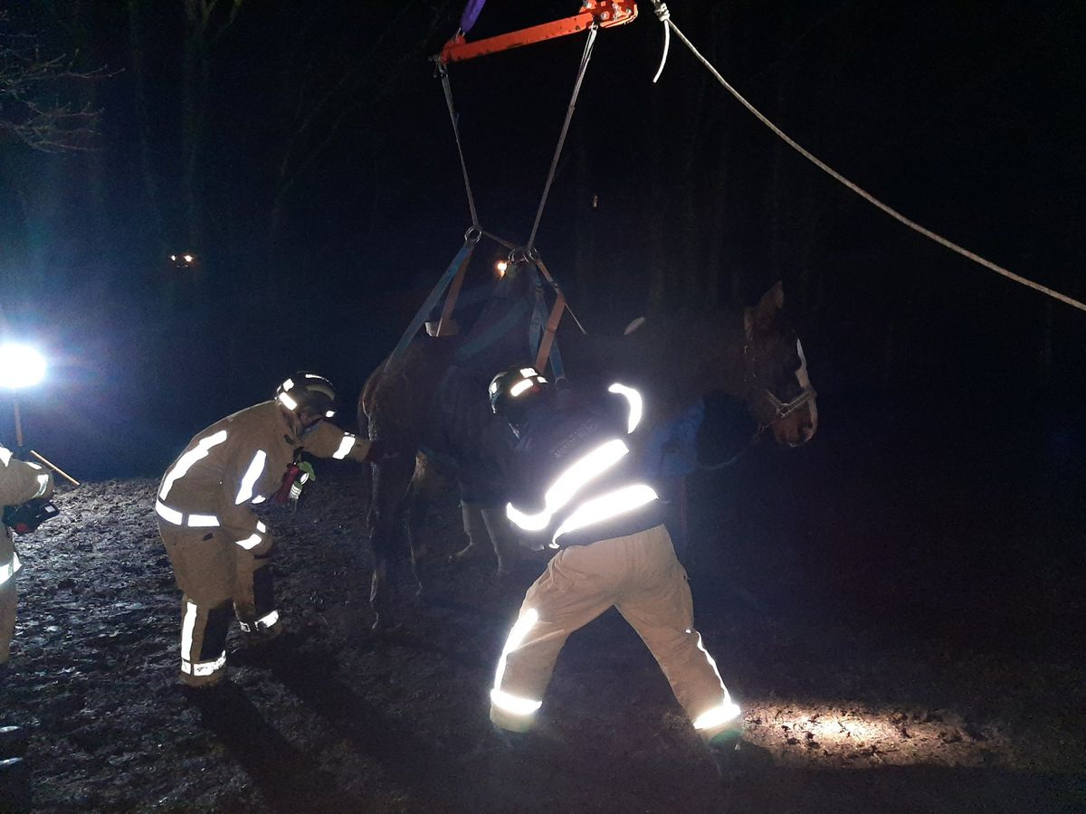 Firefighters were called to help a horse up after it fell in a field. Pic: @TomHatfieldRE