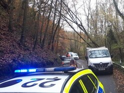 Fallen tree causes rush hour delays in south Shropshire