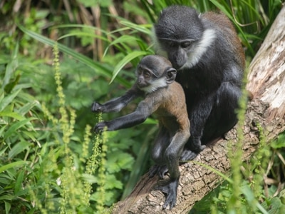 Baby monkey born during lockdown named by Edinburgh Zoo keepers