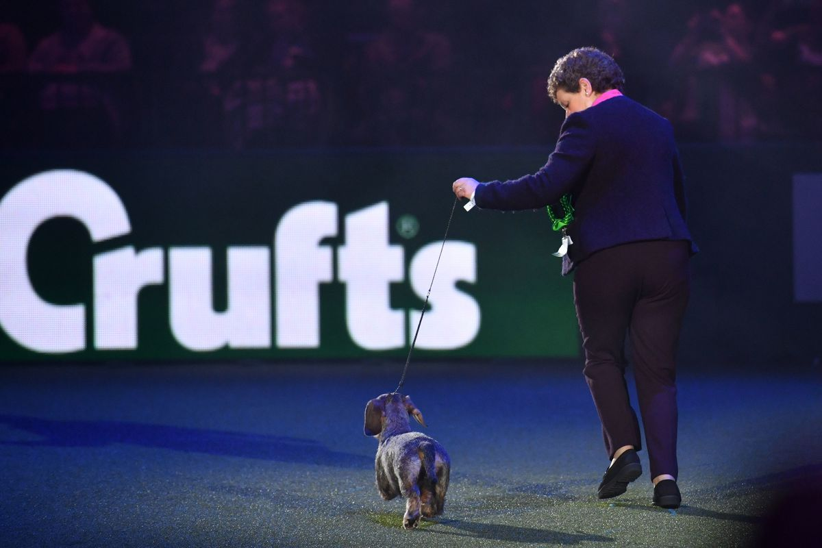Maisie the Wire-haired Dachshund winner of Best in Show 2020 at the Birmingham National with her owner Kim McCalmont at the Exhibition Centre (NEC) during the Crufts Dog Show