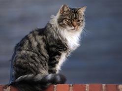 LETTER: Lockdown has not made roads safer for our feline friends