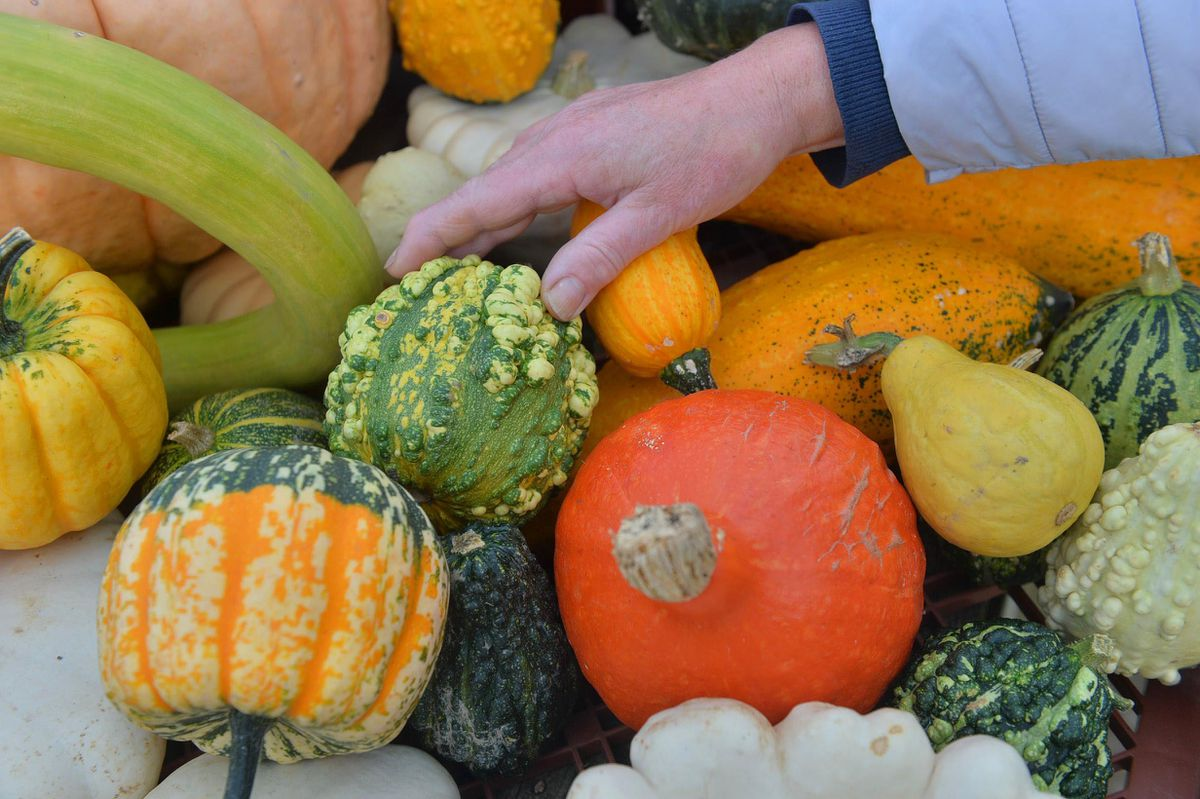 Pumpkins and squash of all varieties are on offer