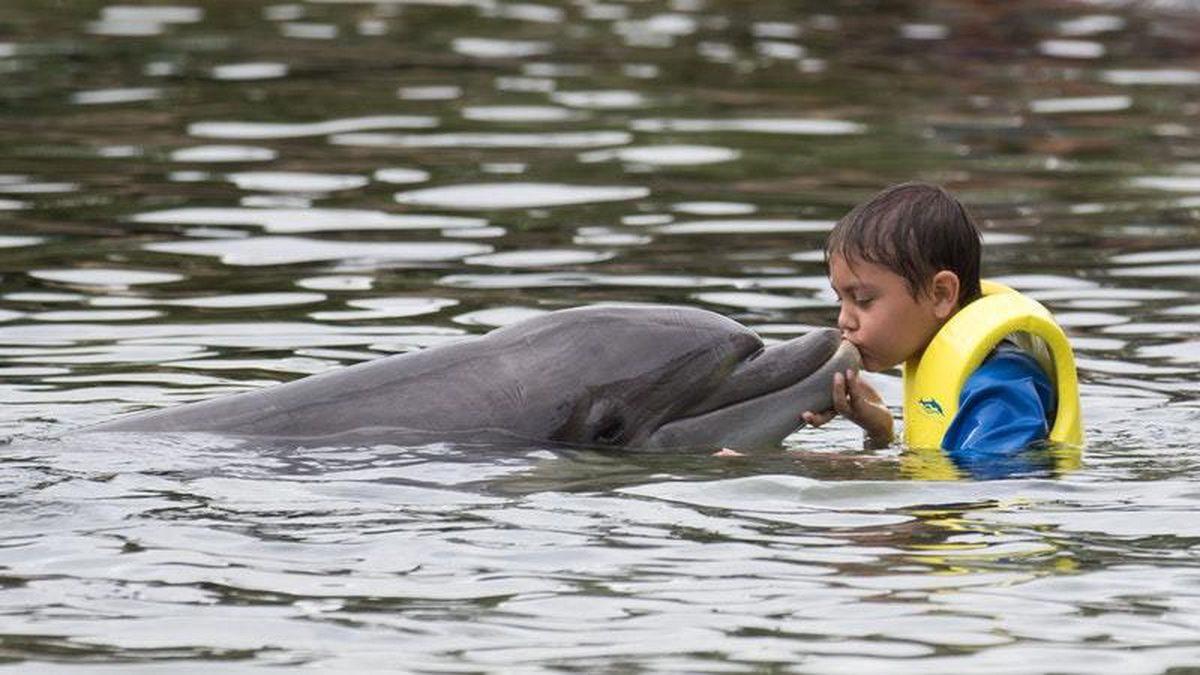 Joseph Mahmud, 10, from Portsmouth, swims with a dolphin during the Dreamflight visit to Discovery Cove in Orlando, Florida