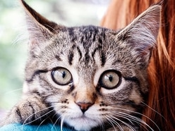 Dozens of kittens dumped on side of roads in rural villages