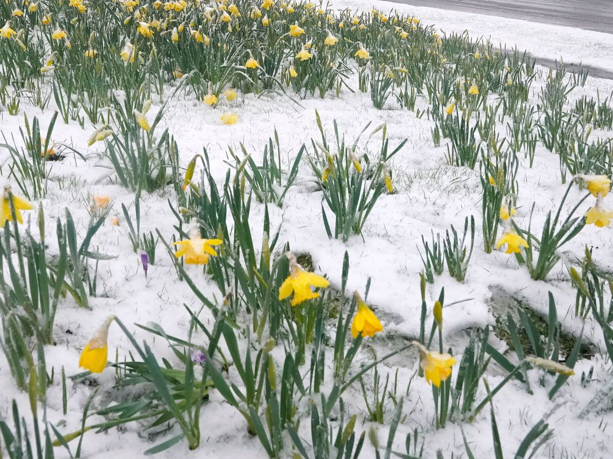 Spring weather Mar 16th 2019