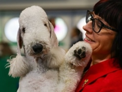 Crufts 2019: Highlights of day three at Birmingham NEC