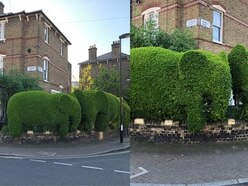 A Londoner shaped his hedges into elephants and the internet loves his work