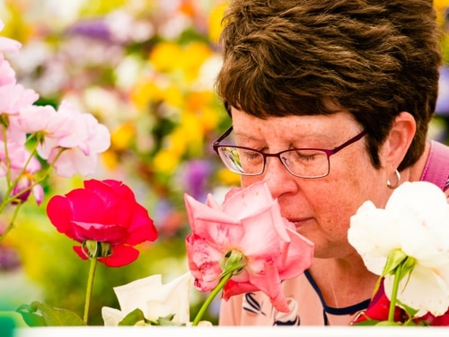 Shrewsbury Flower Show: Thousands flock to quarry for bloomin' marvellous show - with pictures