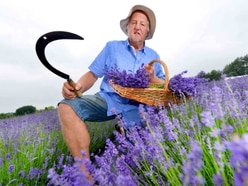 'Best summer ever': Shropshire Lavender couple have great season ahead of last weekend