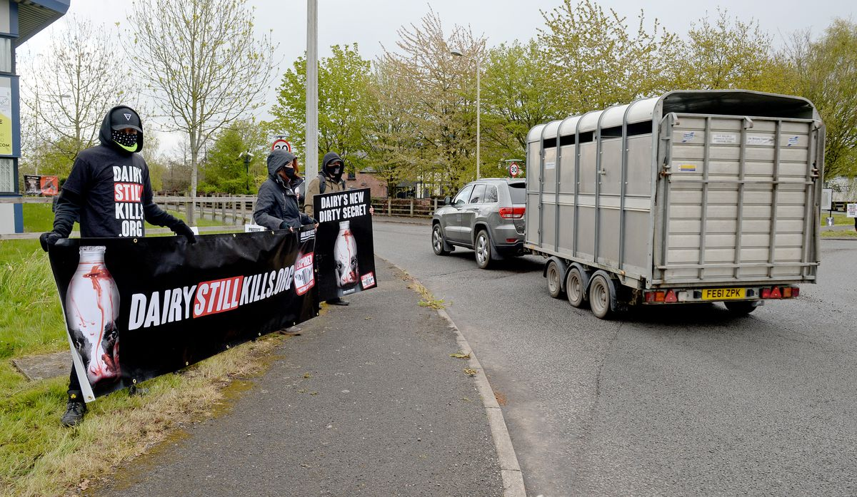 The protestors from the Animal Justice Project demonstrated outside Barbers Auctions