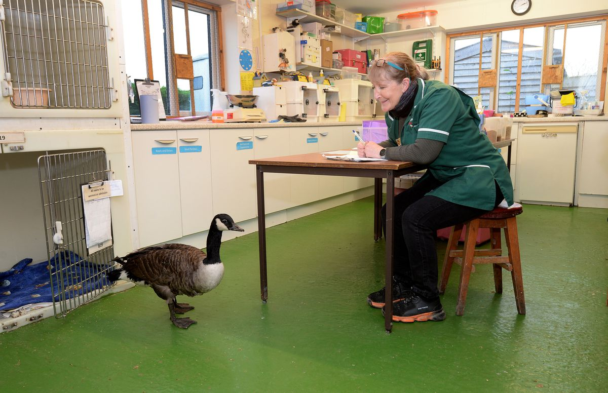 Cuan Wildlife Rescue manager Fran Hill with one of the hospital's latest admissions