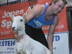 Baa-king mad: Speed shearing competition raises almost £11k for charity