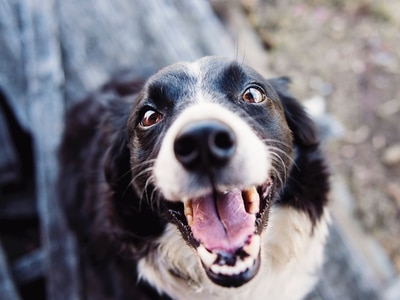 LETTER: Adopt a dog from a shelter