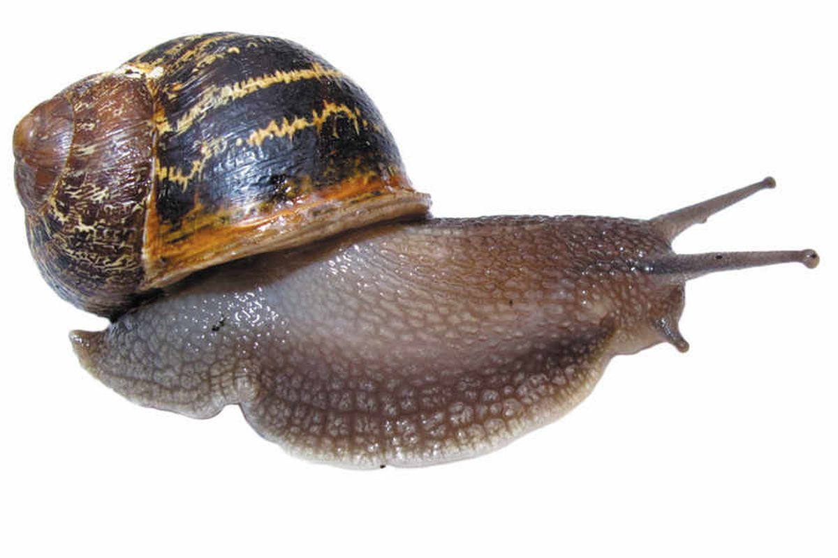 Telford broadband cabinet fire caused by . . . snails