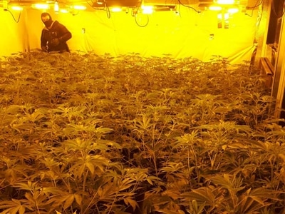 £1.3 million of cannabis seized in raid on takeaway near Whitchurch