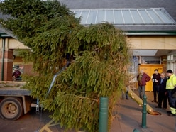 Tree of Light: Market Drayton's annual appeal is back with giant tree installed