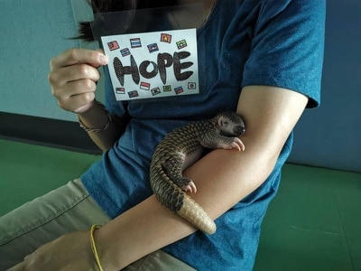Baby pangolin named Hope nursed back to health after being found on road