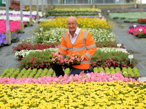 Shrewsbury in Bloom team are planting 300,000 flowers in town to keep it bright and colourful during the summer. Pictured is Gary Farmer