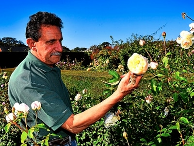 Rose business blooms during October warm spell – but storms are now heading for Shropshire