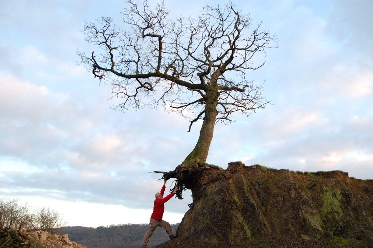 The Flying Oak of Llanyblodwel