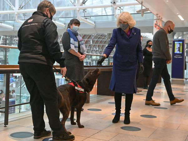 The Duchess of Cornwall pats a dog taking part in a demonstration by the charity Medical Detection Dogs