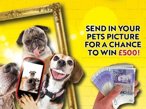 Scroll down to find out more about our Pawtrait Pets competition