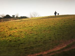 Lyth Hill is being designated as a nature reserve